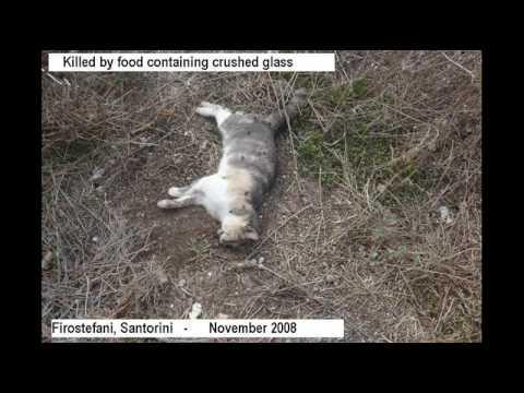 Greek Animal Mass Poisoning Resumed - November 2008