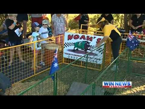 Sandy Creek Pig Races 2013