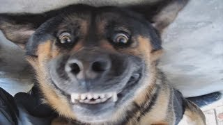 DOGS SMILING FOR CAMERA Compilation