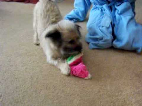tootse with watermelon toy Video