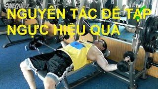 [N1] Những nguyên tắc tập ngực hiệu quả trong gym / thể hình