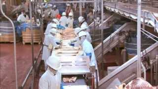 Video Tour of a Pork Plant Featuring Temple Grandin