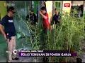 Polisi Temukan 30 Pohon Ganja Dalam Rumah di Malang - iNews Sore 22/04
