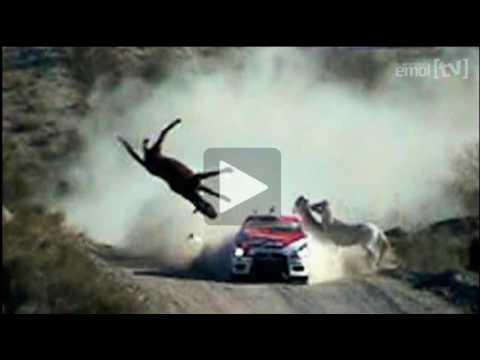 Accidente rally. Federico Villagra atropella a un caballo!!!!!!