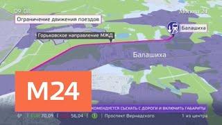 Поезда на участке Реутов – Балашиха не ходят из-за нависших деревьев - Москва 24