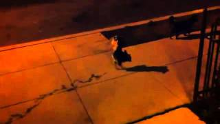 dog_walking_awesome.flv