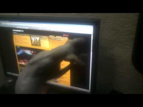 Кот Чучка поймал мышь в мониторе.Cat Chuchka caught a mouse in the monitor.Animals.Юмор.Humor