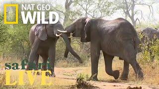 Safari Live - Day 50 | Nat Geo WILD