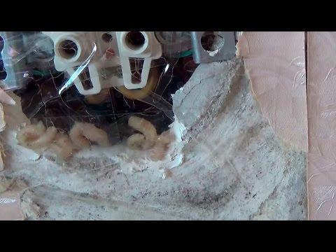 Трупные черви - опарыши ползут через розетки