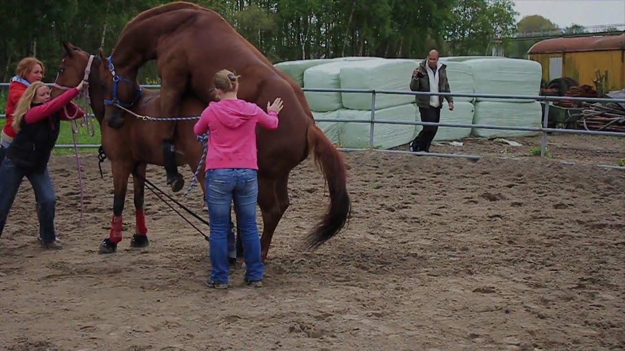 Dekking Tinky versus Texas horse mating - YouTube