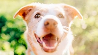 Over 70,000 rescue dogs, cats and pets listed!