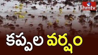 Frogs Rain in Kurnool | కర్నూలు లో కప్పల వర్షం | hmtv
