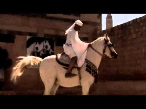 Orginal Arab [yemen] Horses.. 720p Hd video