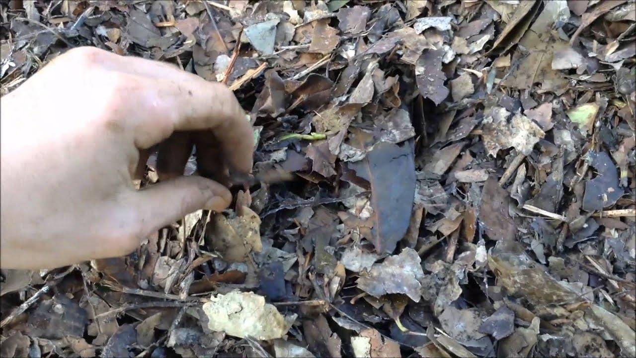 Tutoriel permaculture pr parer son sol pour l 39 hiver for Preparer son potager pour l hiver