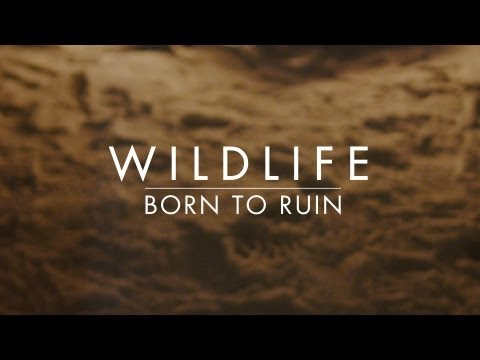 Wildlife - Born To Ruin
