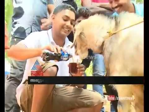 Amazing video :വെള്ളമടിക്കുന്ന മുട്ടനാട് : Asianet News Special