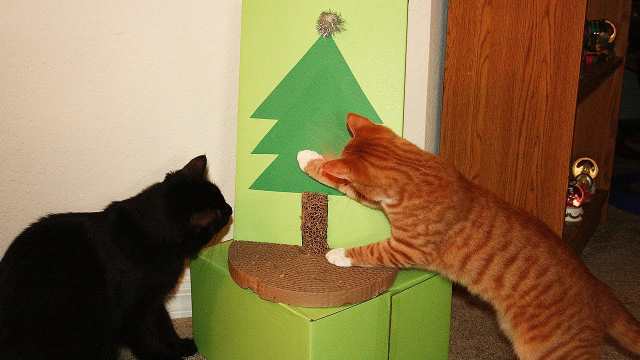 Cat proof christmas tree youtube Christmas tree cat tower