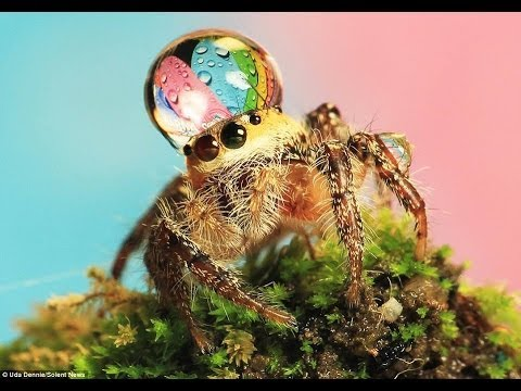 Worlds Most Beautiful Spiders