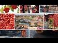 Великая Добронь: село с перцем | #ВУКРАИНЕ