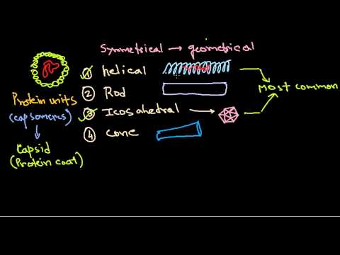 16  Virus protein introduction