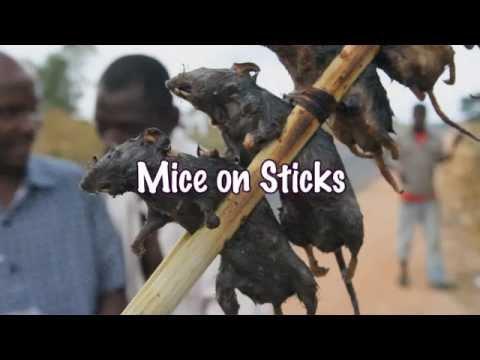 Mice On Sticks