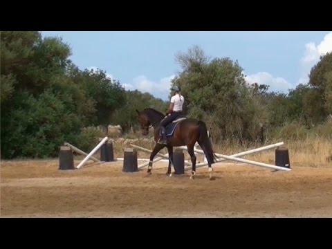 in x out jumping and dressage gymnastic