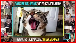 Cats Being Jerks Video Compilation FailArmy Reactions Mashup