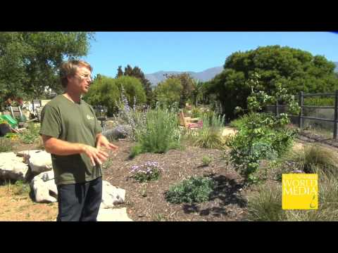 How Perennial and Native Grasses Build Soil Fertility