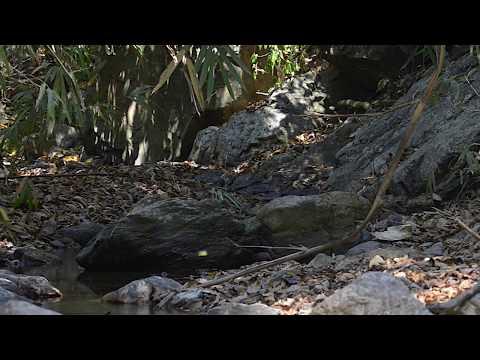 Wildlife Thailand - Dusky Langurs
