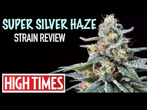 Strain Review: Super Silver Haze (Cup Winner)