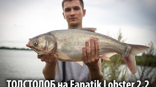 Толстолоб на Fanatik Lobster 2.2