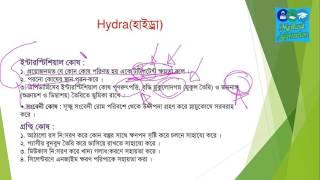 Chapter-2 (Animal's Identity) Hydra class-02