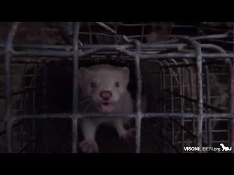 Morire per una pelliccia – Trailer dell'investigazione
