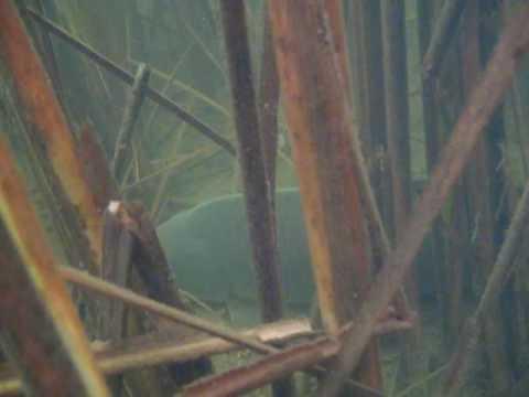 рыбалка в на сазана камышах