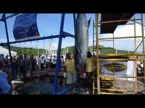 Fishing Tournament Nelson's Dockyard | Antigua W.I.