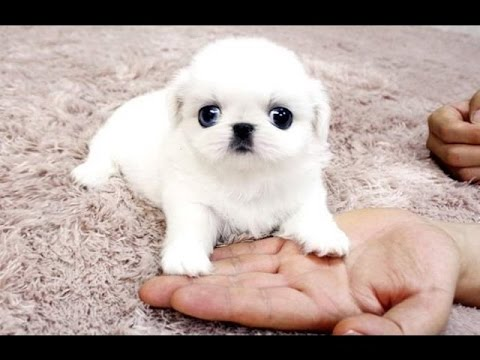 Funny Dogs - A Funny Dog Videos Compilation 2016-TRY NOT TO LAUGH (IMPOSSIBLE CHALLENGE) #1
