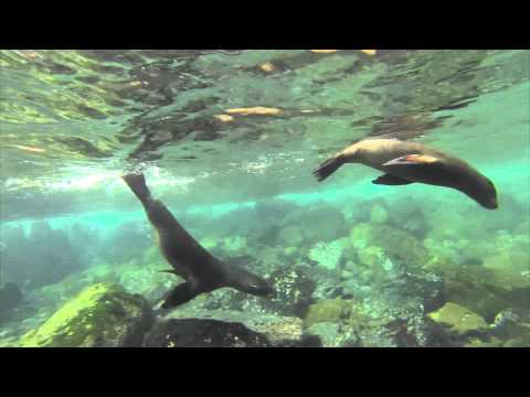 Galapagos. Day 2. Underwater sea lions and turtles