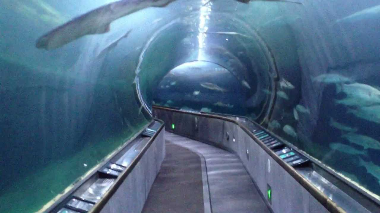 Shark Tunnel At Aquarium Of The Bay In San Francisco Youtube