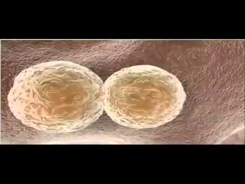 Stem Cell Therapy for Hair Loss | Hair Loss Treatment in India