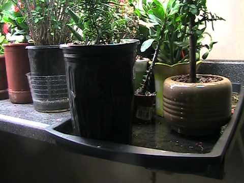 Growing Plants Indoors Under Florescent Lights