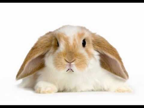 Happy Birthday To You Hippity The Bunny YouTube