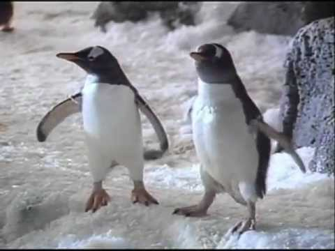 SeaWorld - Make Contact Series - Flap Your Arms -  Commercial - 1980s -1990s