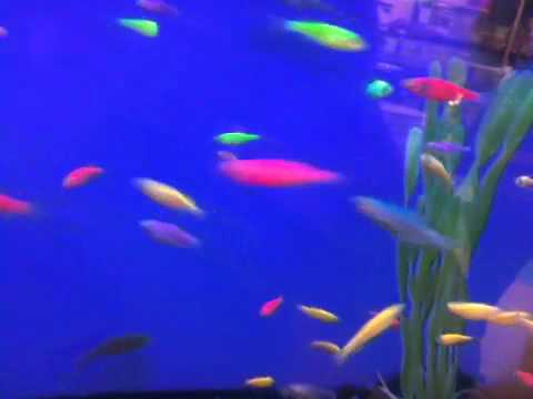 Neon Fish at Walmart Neon Fish