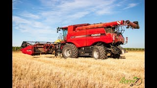 WHEAT HARVEST 2O19|| 3x New Holland and 1x Case IH