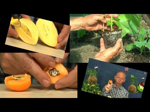 Garten Blumen Gemüse und exotsche Früchte