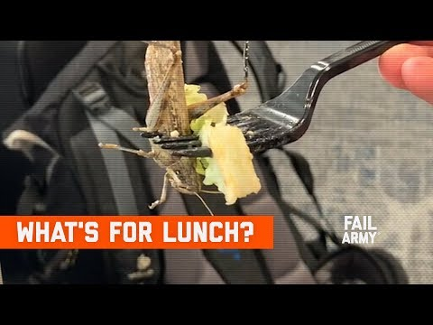 What's For Lunch? Food Fails (November 2019) | FailArmy