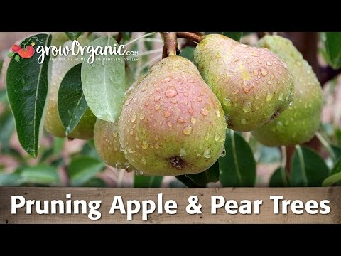 Pruning Apple Trees and Pruning Pear Trees