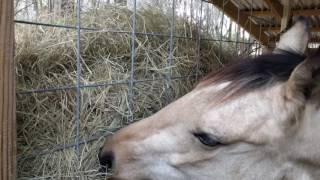 Horse stall built in slow hay feeder