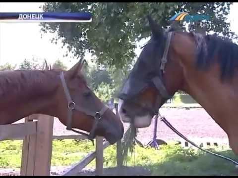 ТК Донбасс -  Единственный в Украине конь-великан
