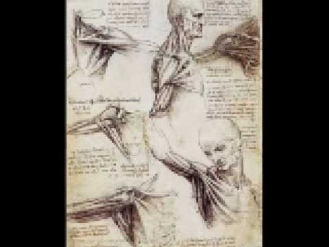 Human anatomy documentary